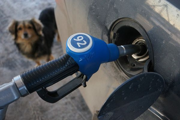 ФАС заявила, что цены на бензин в России не могут быть низкими