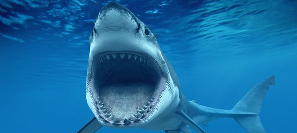 ГИБДД сняла вирусный ролик про акулу