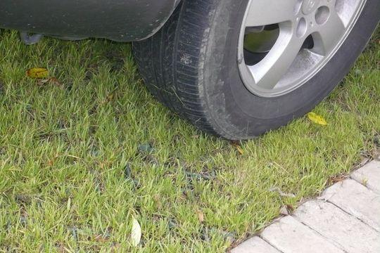 Москвичи смогут жаловаться на парковку на газонах с помощью «Помощника Москвы»