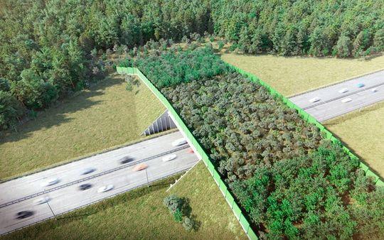 В России открылся первый экодук — мост-переход для животных на трассе M3 «Украина»