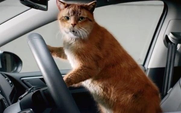 Животное в машине