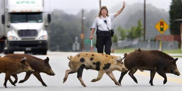 Животное на дороге