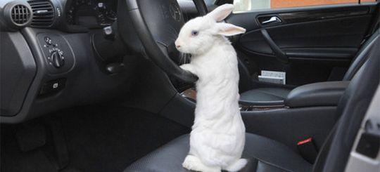 В «Автодоре» решают, как наказывать «зайцев» за проезд по платным дорогам